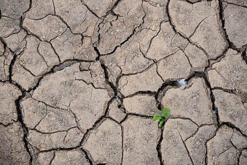 Zakaz poboru wody do podlewania w Gminie Tczew!